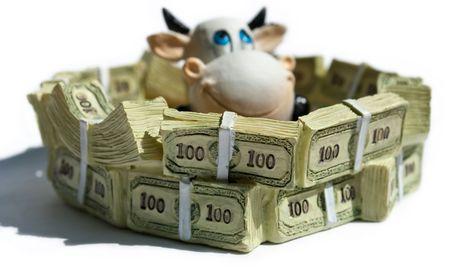 beroofd: koe in een pool van dollar luidende bank biljetten en munten Stockfoto