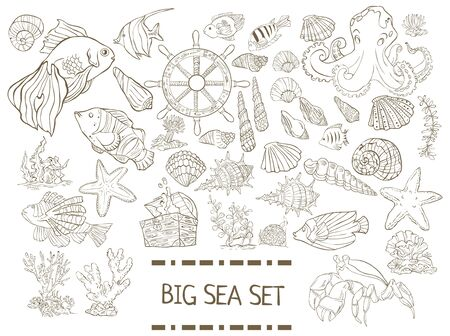 Big sea set. Collection of hand drawn fish, seaweed, octopus, jellyfish,shells isolated on white background