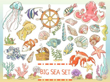 Big colorful sea set. Collection of hand drawn fish, seaweed, octopus, jellyfish, seahorse, crab shells