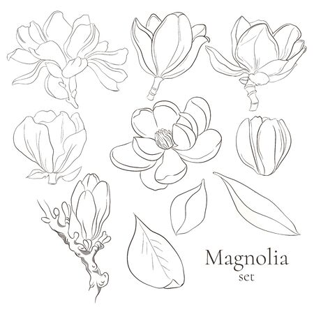 Set of vector line magnolia flowers on white background. Collection of blooming floral for wedding, marriage