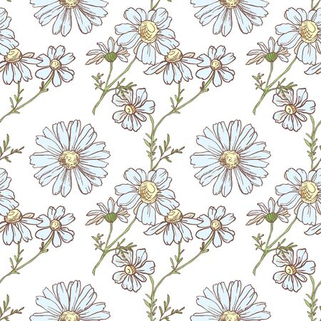Seamless pattern with chamomile on white background