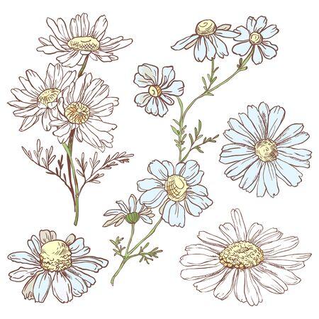 Set of hand drawn chamomile Illusztráció