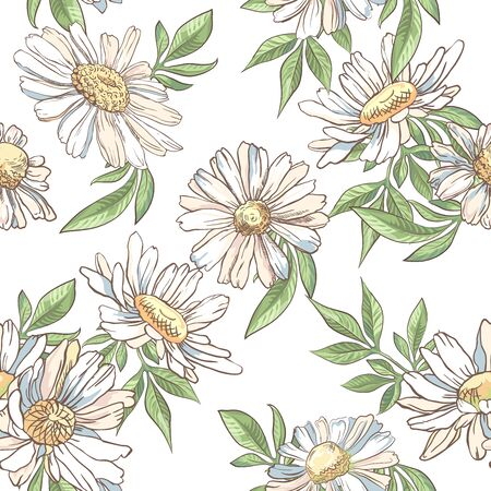 Seamless pattern with white camomile on white background