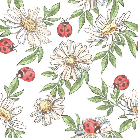 Seamless pattern with white camomile and ladybird on white background Ilustracja