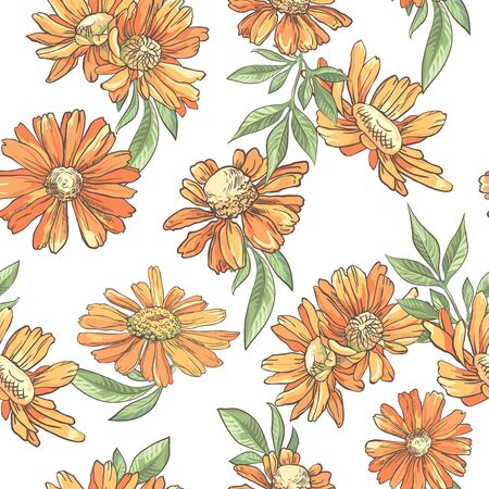 Seamless pattern with orange camomile on white background