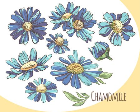 Set of blue camomile. Collection of summer flowers. Vector illustration. Ilustrace