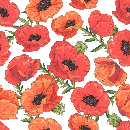 Seamless pattern with poppy flowers and leaves on white background. Vector illustration