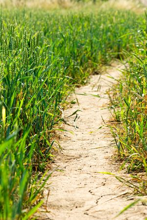 Road at green field of wheat Stock Photo - 7461154