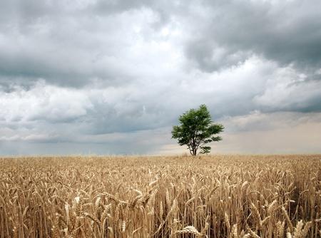 Field before the rain Stock Photo - 8518739