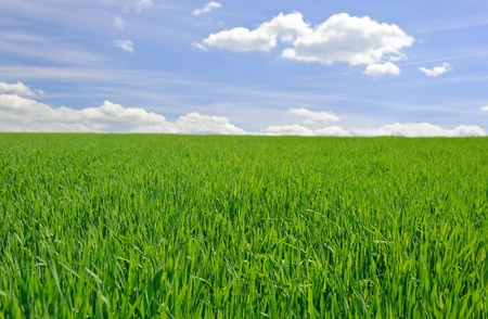 field of grass photo