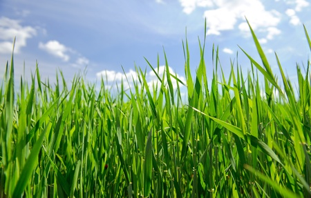 field of grass Stock Photo - 9667831