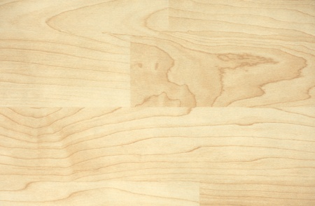 Wood texture. Maple photo