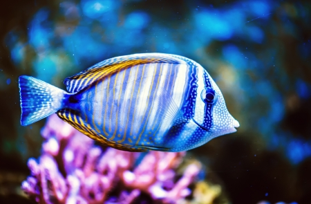 a tropical Fish on a coral reef  photo