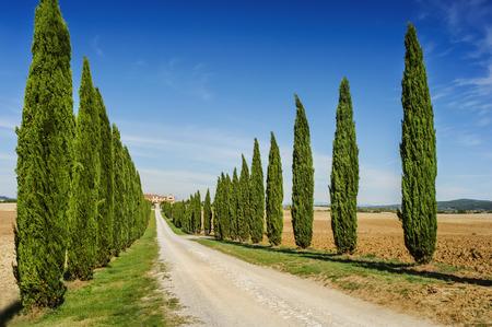 far off: Tuscany road with cypress trees, Val dOrcia, Italy Stock Photo