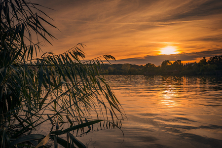 Beautiful sunset view with vibrant colors behind willows on a lake