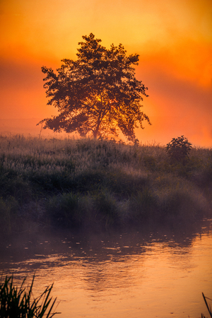 Lonely tree on the riverside in the morning against the sunrise in the fog with rich vibrant colors 版權商用圖片