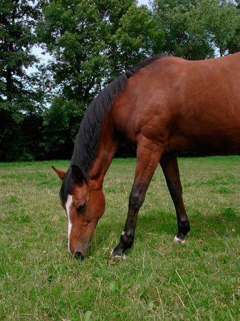Brown horse out at feed on a meadow