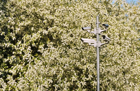 Monitoring cameras in front of an white flowered shrub