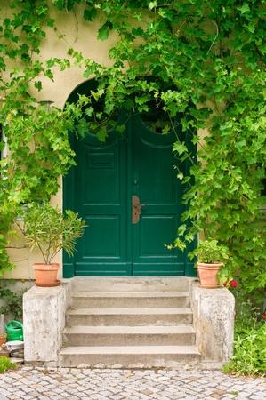 Old green wooden front door with virginia creeper