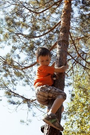 hight: little cute boy climbing on tree hight, summer adventure Stock Photo