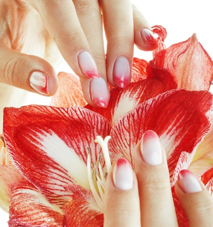 ombre: beauty delicate hands with pink Ombre design manicure holding flower amaryllis close up isolated warm macro, luxury salon concept Stock Photo