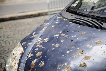 poo: hood of car with lot of bird droppings, bad parking concept close up Stock Photo