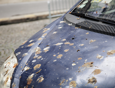 capote: hood of car with lot of bird droppings, bad parking concept close up Stock Photo
