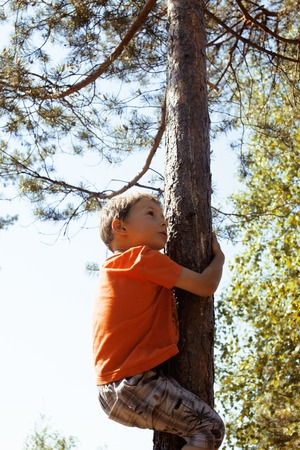 hight: little cute real boy climbing on tree hight, outdoor lifestyle concept close up Stock Photo