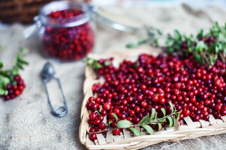 autumn berries on table, lingonberry raw close up 免版税图像
