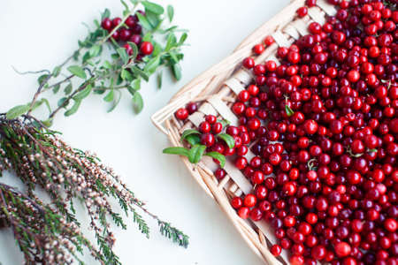 autumn berries on table, lingonberry raw closeup