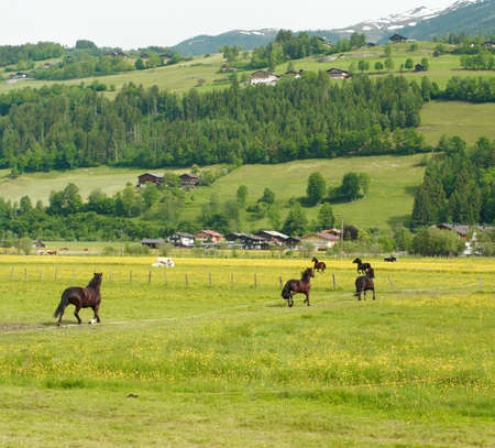 Horse on a grazing land