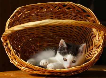 Dolorous little cat and basket