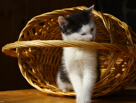 Little cat and basket Stock Photo