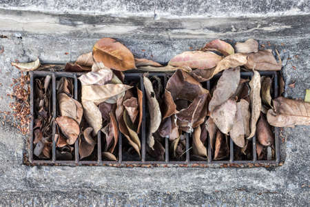 dry leaf: Drain cap with dry leaf Stock Photo