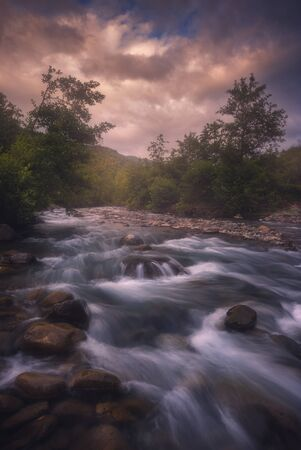 River Water Flow Between beautiful Forest Trees Фото со стока