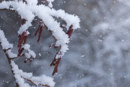 Branch covered with sparkling hoarfrost and snow on a snowy field. Beautiful image of a winter meadow