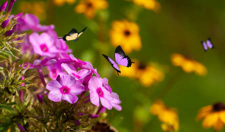 Beautiful blooming flowers. Spring-summer garden and flying butterflies on blurred sunny shiny glowing background, fairy tale nature.