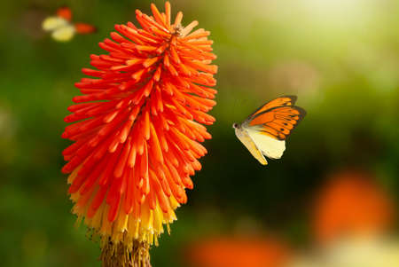 Beautiful blooming flower. Spring-summer garden and flying butterflies on blurred sunny shiny glowing background, fairy tale nature. Фото со стока