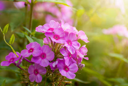 Beautiful blooming flowers on blurred sunny shiny glowing background, fairy tale nature. Spring-summer garden.