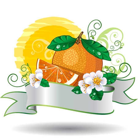 sliced fruit: Sliced orange with banner Illustration