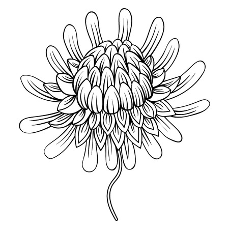 ginger flower plant: Coloring page with Etlingera flowers, Torch Ginger, Philippine Waxflower  zentangle illustartion for adult Coloring books or tattoos with high details isolated on white background. Vector monochrome sketch. Illustration