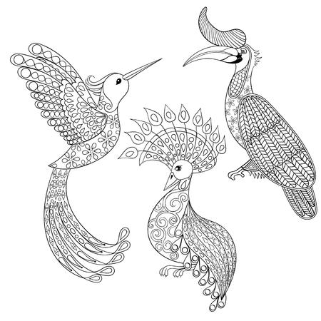 pajaros: Dibujo para colorear con el pájaro rinoceronte, Hummingbird y aves exóticas, illustartion zentangle para los libros para colorear para adultos o tatuajes con detalles altos aislados sobre fondo blanco. Conjunto de vectores en blanco y negro de aves.