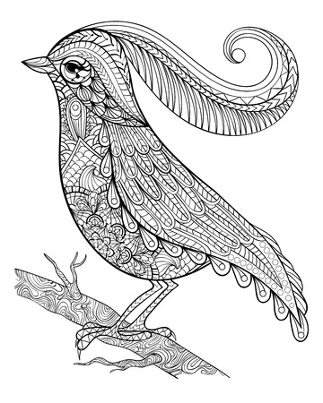 Hand drawnbeautiful delicate bird sitting on a branch framed for adult anti stress Coloring Page with high details isolated on white background, illustration in zentangle style. Vector monochrome sketch. Bird collection.