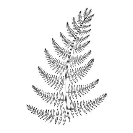 Zentangle vector mannelijke Varen voor tatoeage in boho, hipster stijl. Sier tribal patroon Grass illustratian voor volwassen anti-stress kleurplaten. Hand getrokken geïsoleerde zwarte schets. Plantencollectie.