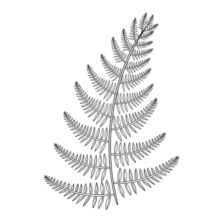 Zentangle vector male Fern for tattoo in boho, hipster style. Ornamental tribal patterned Grass illustratian for adult anti stress coloring pages. Hand drawn isolated black sketch. Plant collection.