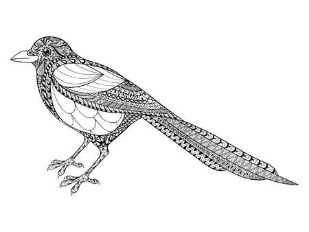 stile: Disegno a mano Magpie illustrazione per antistress colorare con dettagli elevati isolato su sfondo bianco, in stile zentangle. Vettore in bianco e nero schizzo. collezione di uccelli. Vettoriali