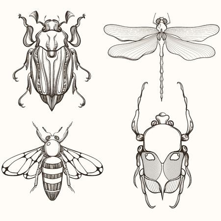 volar: Dibujado a mano Esbozo de grabado del escarabajo del escarabajo, insecto de mayo, la abeja y de la libélula. Diseño de tatuaje y decorativo broche hecho a mano. Vectores