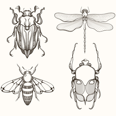 dragonflies: Hand drawn engraving Sketch of Scarab Beetle, May bug, Bee and Dragonfly. Design for tattoo and handmade decorative brooch.
