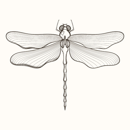 Hand drawn engraving Sketch of Dragonfly. Vector illustration for tattoo and handmade decorative brooch. Illustration
