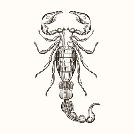 Hand drawn engraving Sketch of Scorpion. Vector illustration for tattoo and handmade decorative brooch.